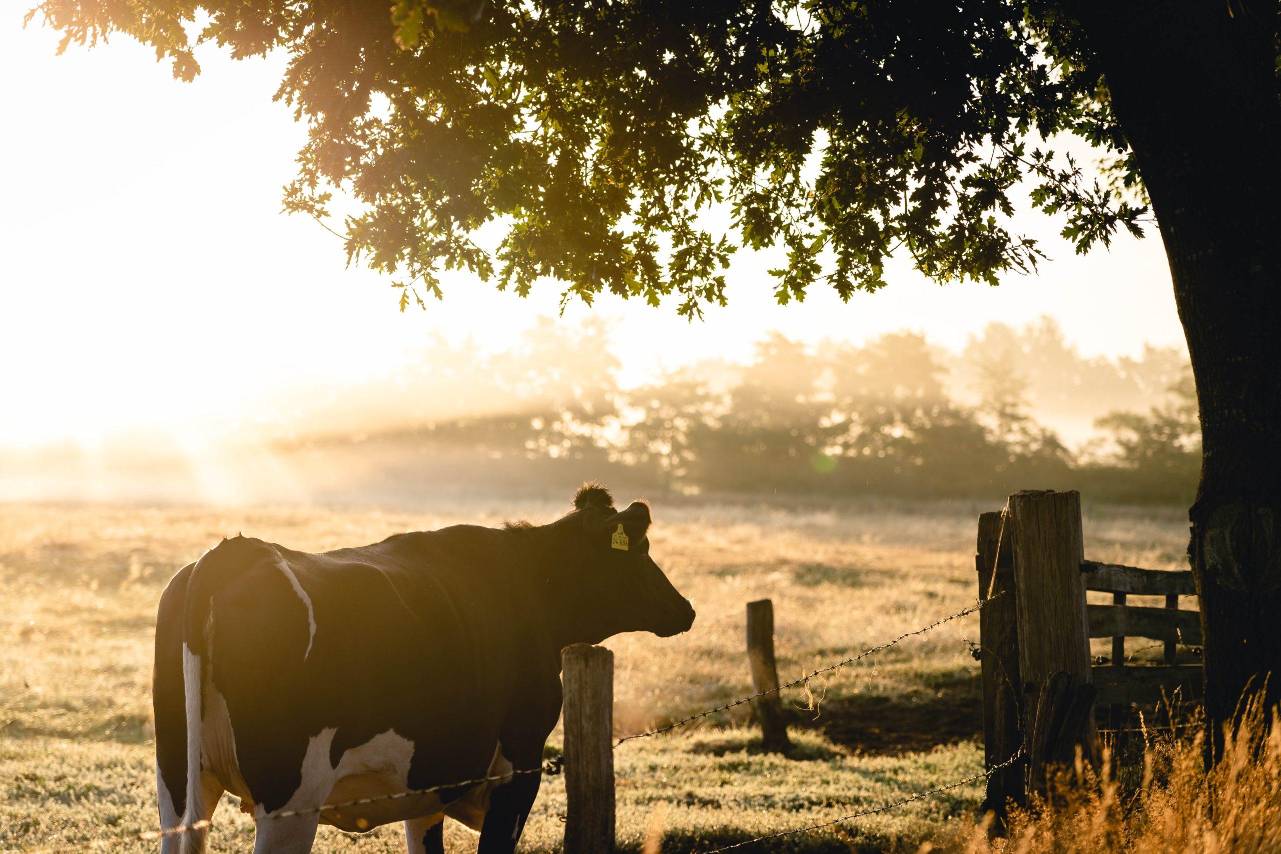 Leve Blastad - norsk landbruksutdanning